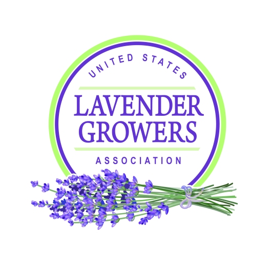 Lavender Final