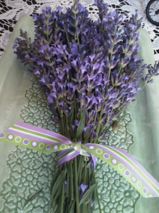 English lavender bundle