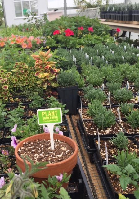 gh plants 5.14.17
